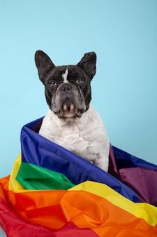 Cane bulldog francese con bandiera arcobaleno