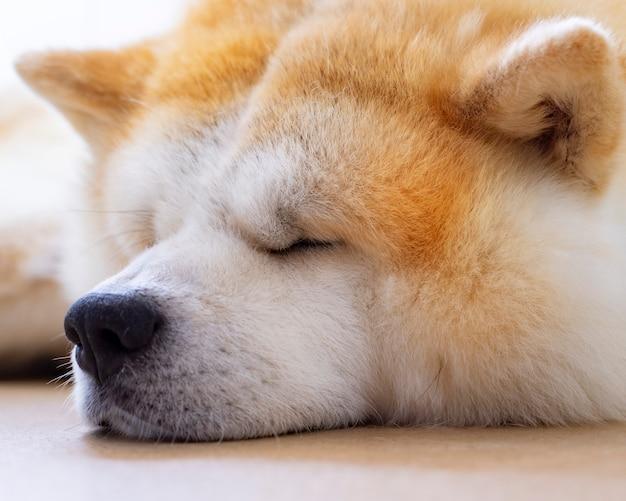 Cane carino dormire sul pavimento
