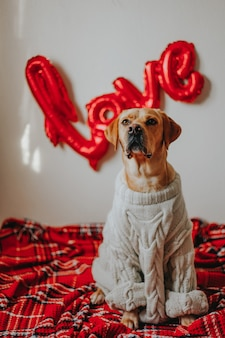 Cane carino seduto sul pavimento con coperta e palloncini amore