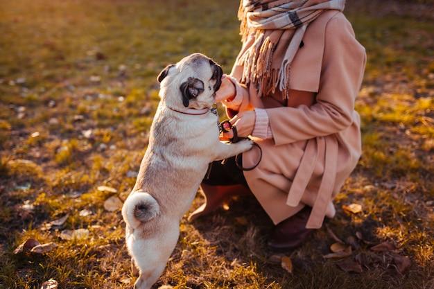 Cane carlino. cane di camminata del carlino della ragazza nel parco di autunno. animale domestico felice che salta sulle gambe della donna. cane che suona
