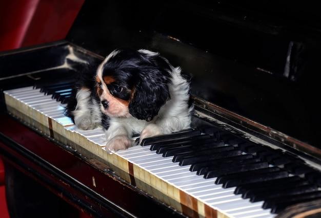 Cane cavalier king al pianoforte.