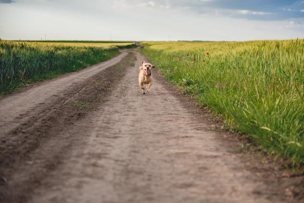 Cane che corre lungo la strada