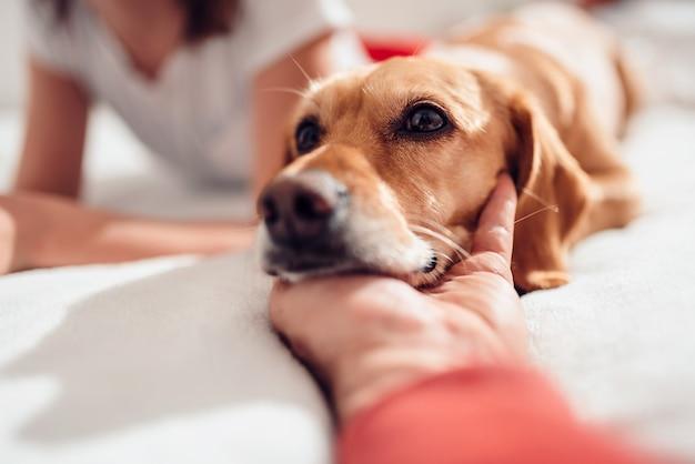 Cane che dorme sulla mano dei proprietari nel letto