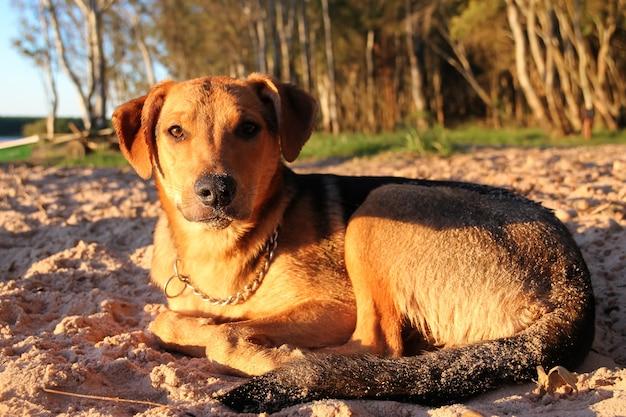 Cane che dorme sulla spiaggia sabbiosa in vacanza