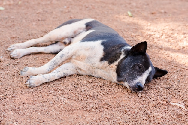 Cane che dorme sulla terra