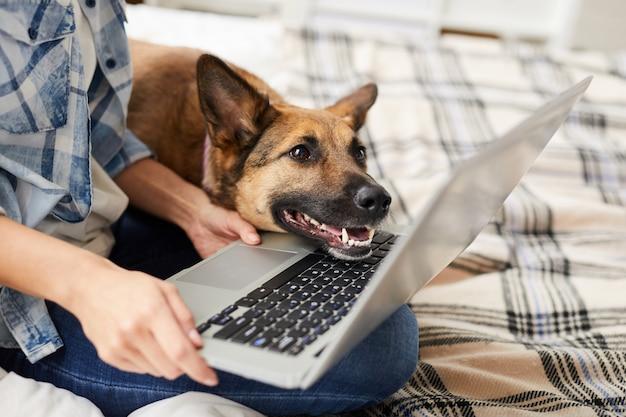 Cane che esamina lo schermo del computer portatile