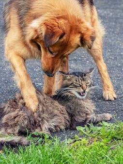 Cane che gioca con un gatto