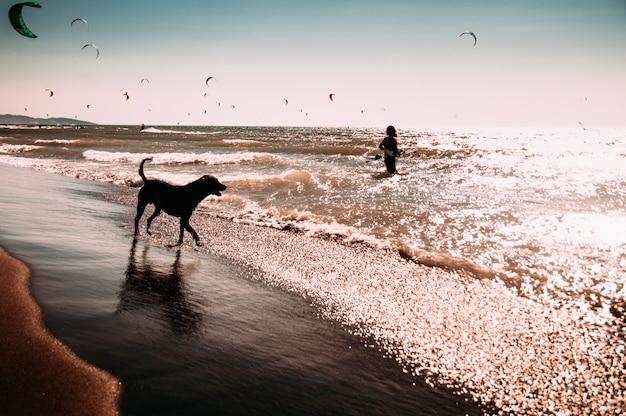 Cane che gode giocando sulla spiaggia