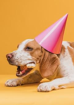 Cane che indossa un cappello da festa e mangia un osso