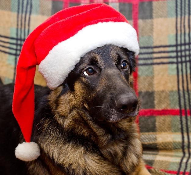 Cane che indossa un cappello di babbo natale