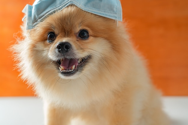 Cane che indossa una maschera antinquinamento per proteggere la polvere pm2.