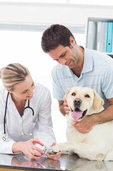 Cane che ottiene gli artigli tagliati dal veterinario