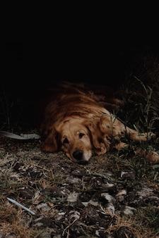 Cane che riposa sotto una macchina