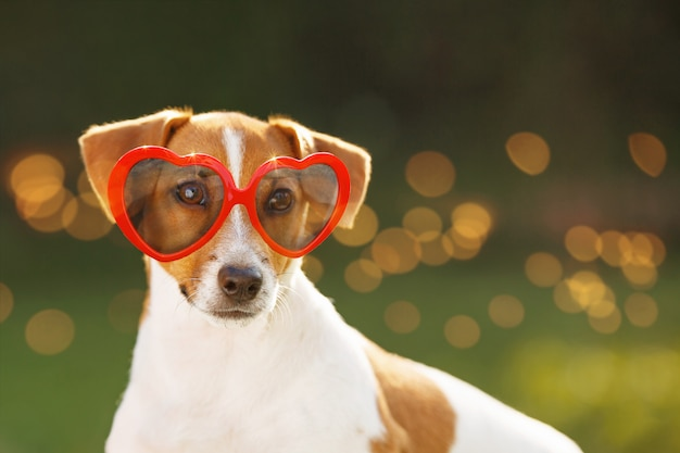 Cane che si espone al sole con gli occhiali, gli occhi nascosti, la messa a fuoco morbida.