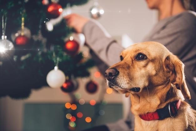 Cane che si siede dall'albero di natale