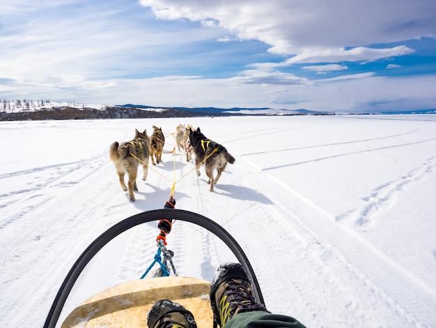 Cane che slitta nel lago ghiacciato baikal, russia