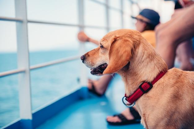 Cane che viaggia sul traghetto