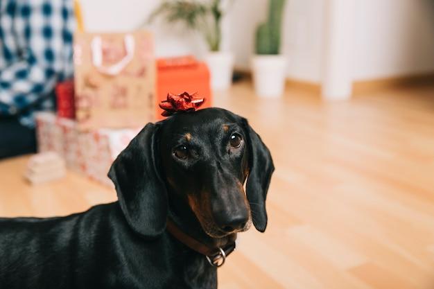 Cane con decorazioni natalizie