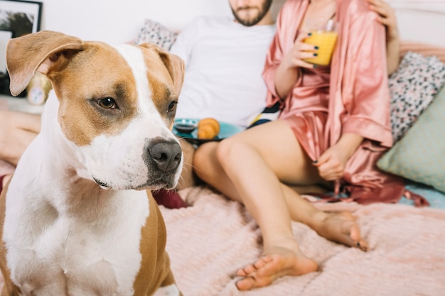 Cane con i proprietari durante la mattinata