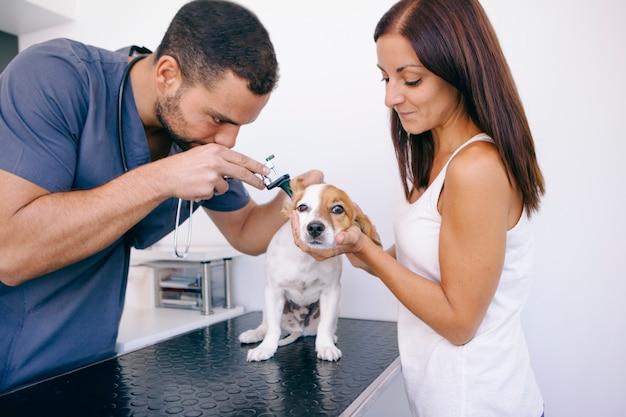 Cane con infezione all'orecchio in clinica