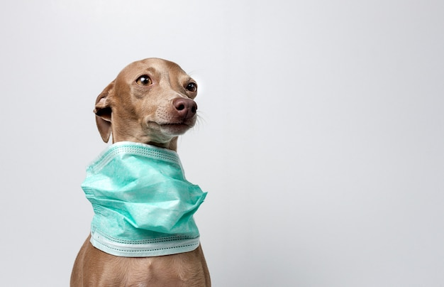 Cane con maschera di protezione coronavirus