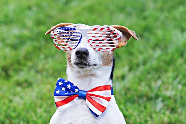 Cane con occhiali da sole a stelle e strisce con bandiera americana