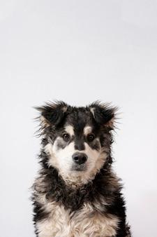 Cane copia-spazio su sfondo bianco