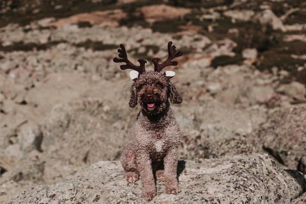 Cane da caccia in palude spagnolo marrone sveglio che si siede sul pavimento di legno. concetto di autunno. all'aperto