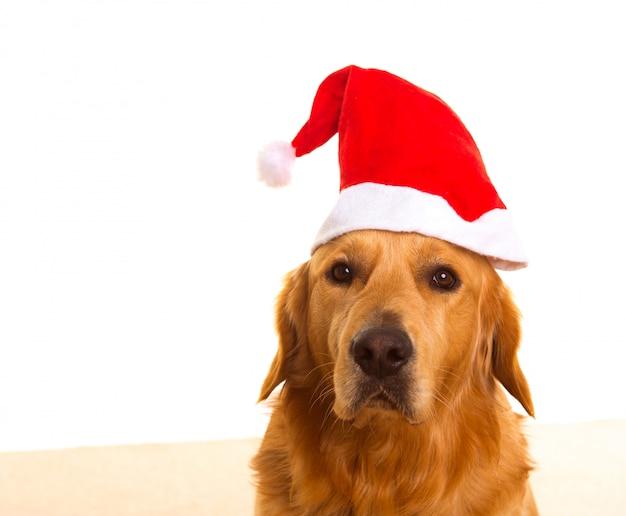 Cane di golden retriever con cappello rosso santa di chirstmas