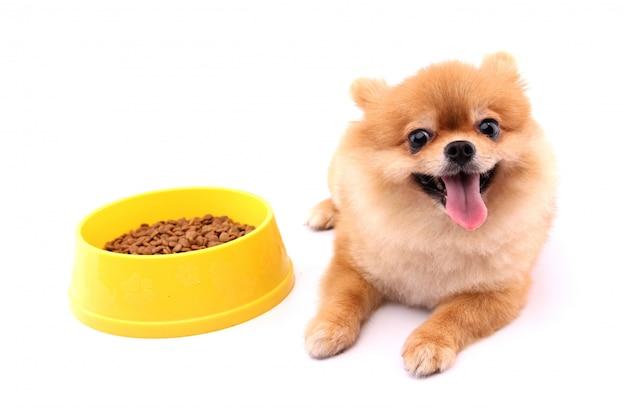 Cane di pomeranian e cibo per cani e fondo bianco.