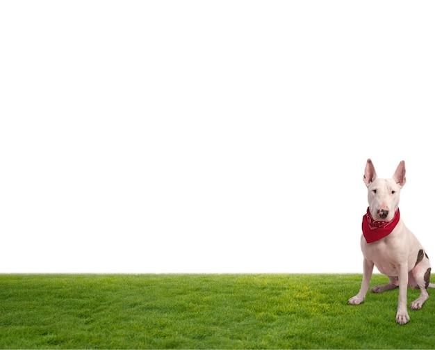 Cane di seduta su sfondo bianco