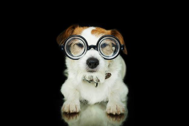 Cane divertente che indossa occhiali nerd geek