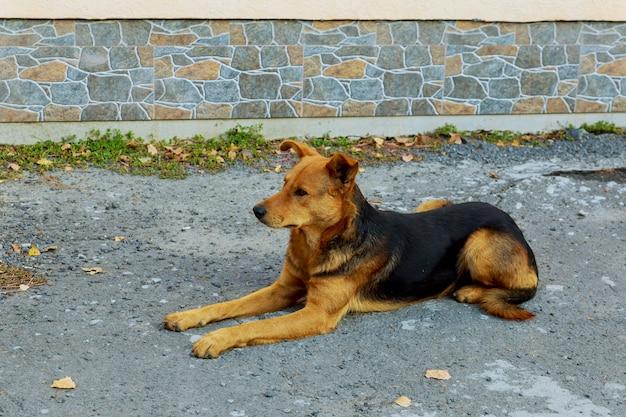 Cane divertente che si siede sul cemento la strada