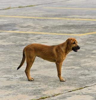 Cane domestico in piedi sulla strada
