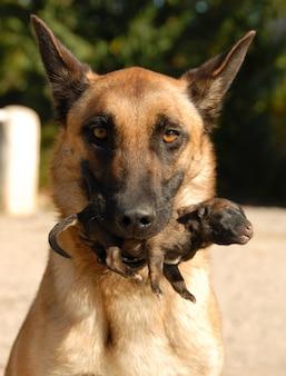 Cane e cucciolo di madre