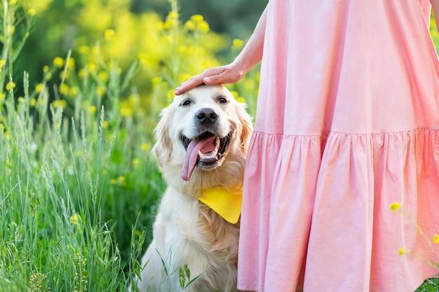 Cane felice del documentalista dorato con la ragazza sulla natura di estate