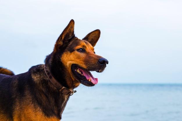 Cane felice rilassante sulla spiaggia.