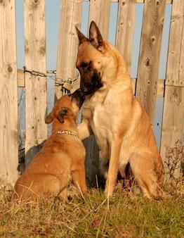 Cane femmina e cucciolo