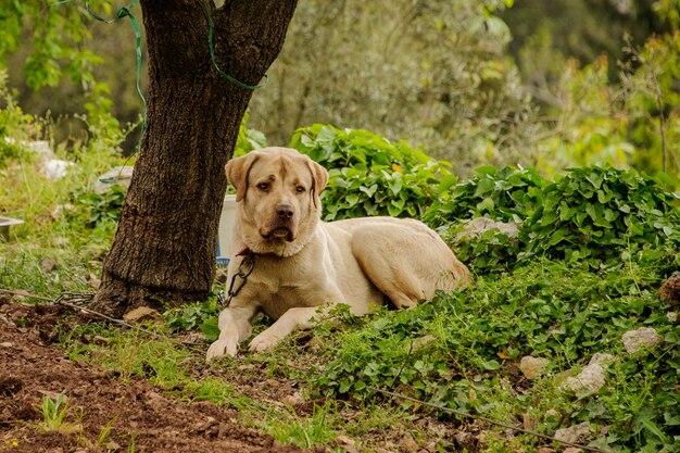 Cane giace a terra nella foresta