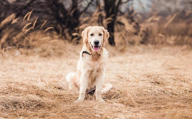 Cane giovane sveglio con la lingua fuori sulla natura