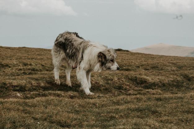 Cane grigio e bianco a pelo corto medio su una collina verde sotto con le montagne