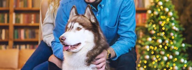 Cane husky adulto a casa con i proprietari.