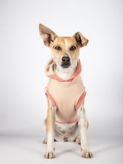 Cane ibrido che si siede sul fondo bianco che aspetta per essere adottato. concetto di adozione.