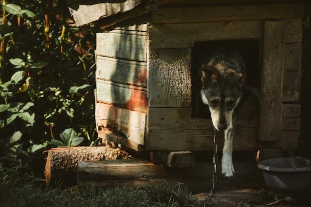 Cane in cabina con catena.