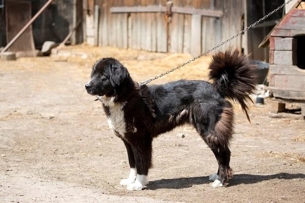 Cane in cattività
