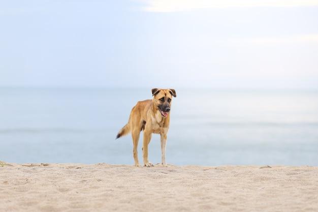 Cane in piedi in spiaggia al mattino.