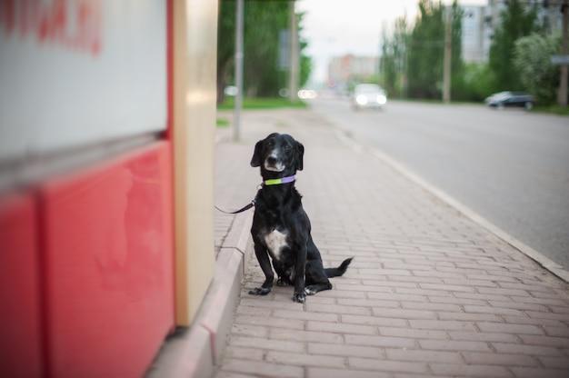 Cane in piedi su una strada