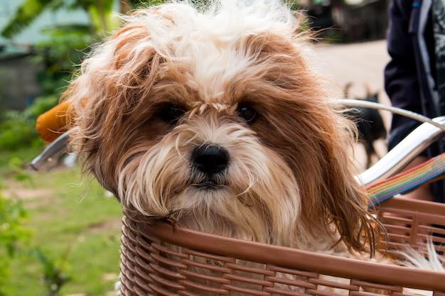 Cane in un cestino in bicicletta
