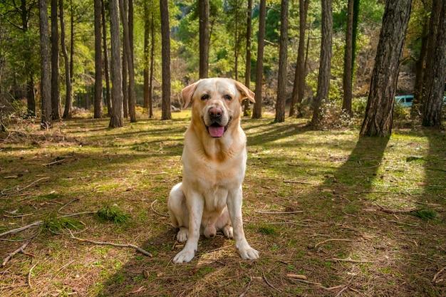 Cane in un fiume di montagna con alberi ad alto fusto