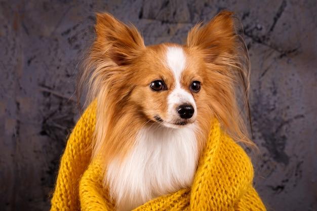Cane in un maglione accogliente